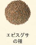 エビグサの種